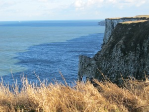 cliffs at New Roll-Up6 - Bempton Cliffs 29-10-13