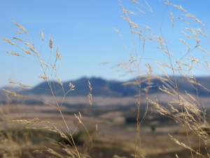 NOASV #7 autumn sky, dried grasses 12-10-13